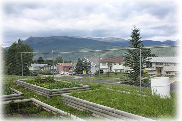 Garden and mountain