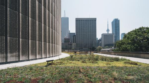 Green roof at Toronto's City Hall