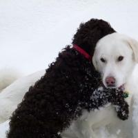 Dogs hugging in snow