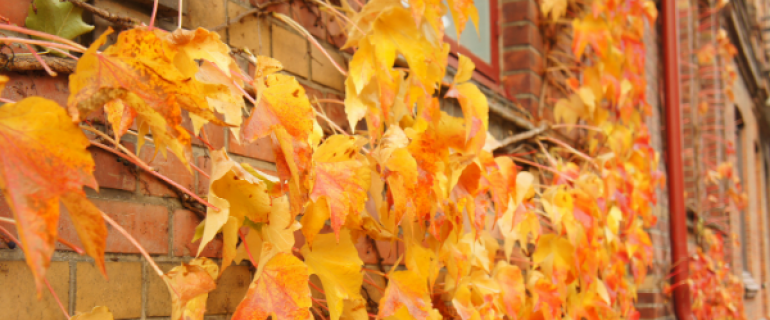 Fall leaves over brick building by Maroke from Getty Images/Canva