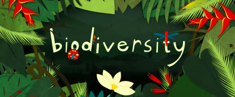 What is biodiversity and why is it important?