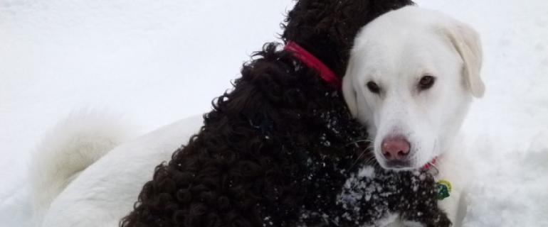 Cana and Monty dogs hugging in snow