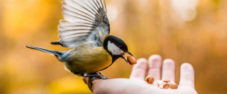 Bird feeding from person's hand