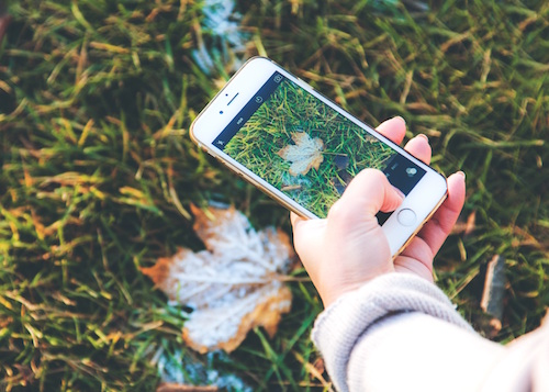 Person taking a picture of a leaf using a smartphone.